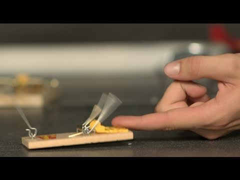 mouse-trap-finger-challenge-the-slow-mo-guys.html