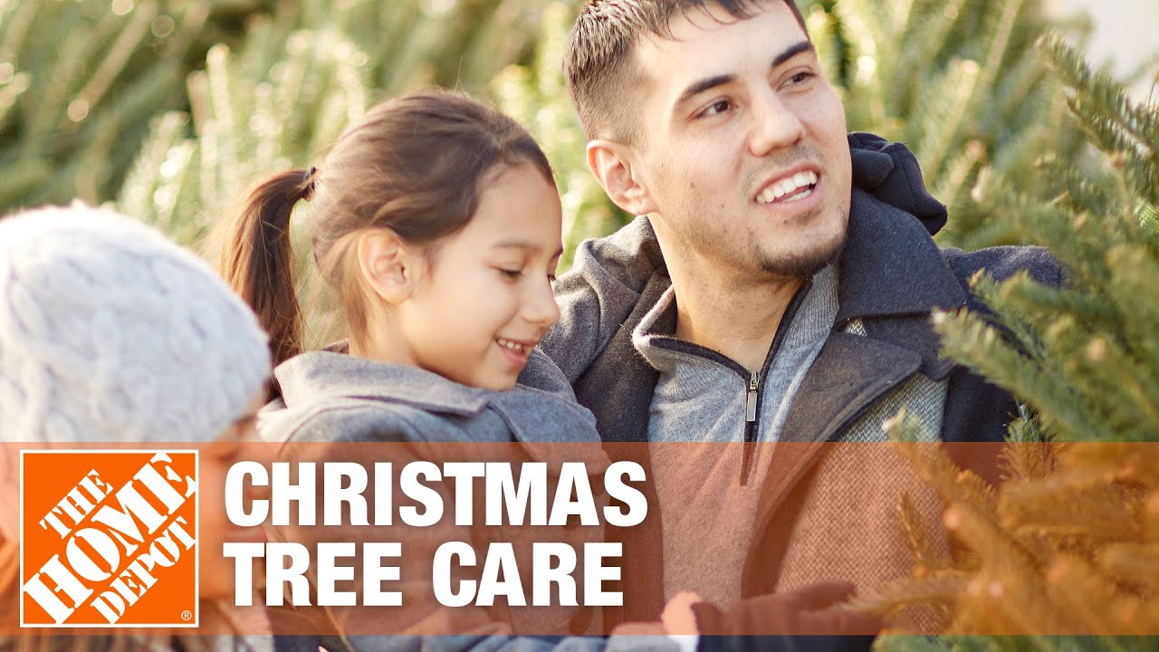 How To Care For A Fresh Cut Christmas Tree The Home