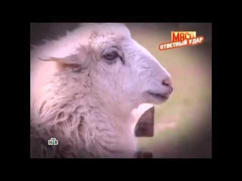 """Калмыцкая баранина в передаче НТВ """"Выход Есть!"""""""
