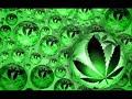 Mc Ardilla-Marihuana