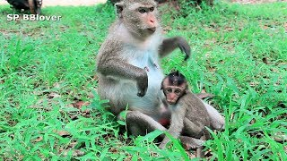 How Do Monkey Weaning Baby - Mom Try Run Away From Baby