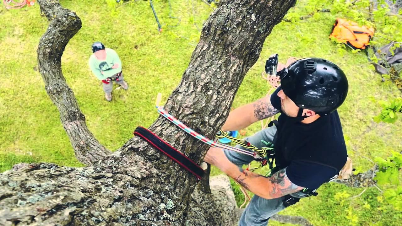 Climbing tree movie house