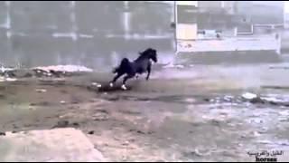 اجمل احصان في العالم