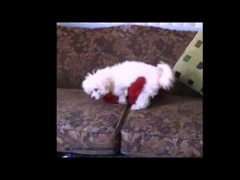 Fucking Dog (vine) video