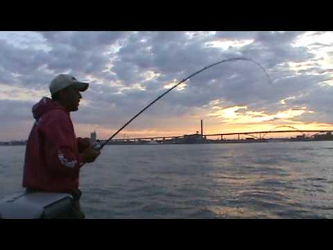 Huge salmon Lake Michigan Salmon fishing Killer King Salmon--No Trolling Lake Michigan!