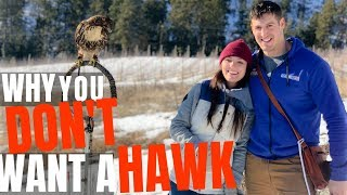 10 Reasons NOT to Own a Hawk | Falconry