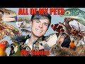 MEET ALL OF MY PETS! (Over 30 Exotic Animals) 2018   Tyler Rugge