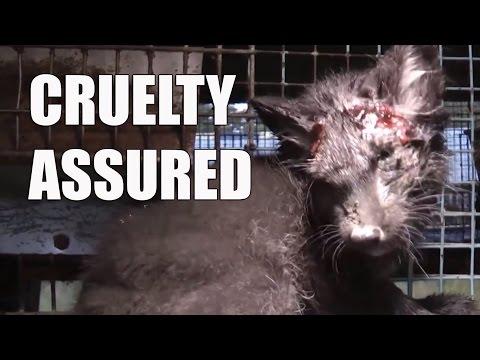 Video: New PETA anti-fur campaign