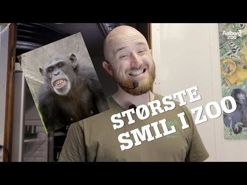 INTERNATIONAL TIGER DAG | VI SVARER PÅ JERES SPØRGSMÅL | ELEFANT QUIZ  |  AALBORG ZOO VLOG 09