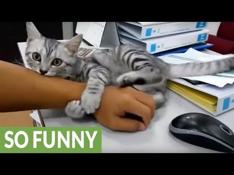 マウス操作をさせまいと腕にしがみつき邪魔する子猫が激カワイイ♪