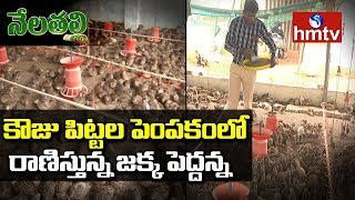 Young Farmer Quails Farming Success Story | Nela Talli | hmtv