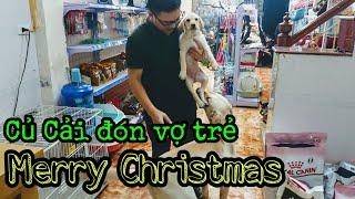 Củ Cải đón vợ về sống chung, món quà giáng sinh | A Christmas Gift for my dog is a puppy labrador
