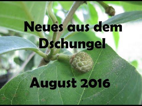Neues aus dem Dschungel (Aug 2016) -  English Subs