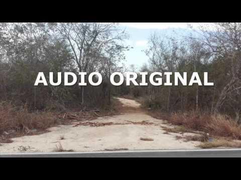 236.-  Audio De Los Lamentos De La