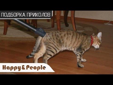 САМЫЕ СМЕШНЫЕ ПРИКОЛЫ с котами 2017! Смотреть всем! ДО СЛЕЗ!
