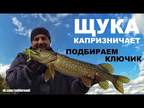 Ловля пассивной щуки. Поиск щуки осенью. Джиг-спиннинг. Рыбалка 2017.