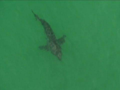 Man Killed in Shark Attack in Australia