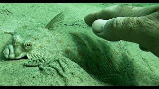 Fiskevand: Syd for Havknude/ Kystfiske-Anmeldelse m. Testdyk/ Djursland