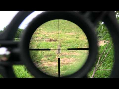 Rabbit Shooting With A .17 Hmr Rifle