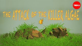 Attack of the killer algae - Eric Noel Muñoz