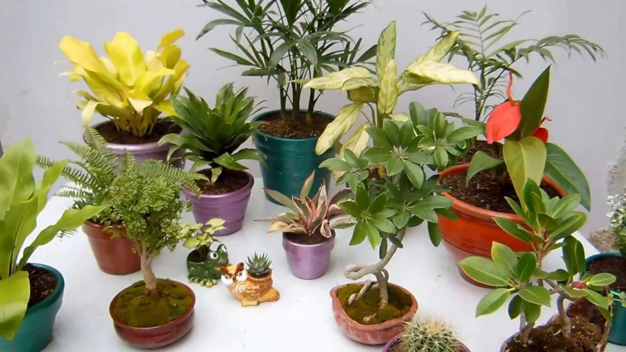 Plantas de interior decoraci n parte 2 youtube for Decoracion con plantas en living