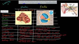 C.6.3. Structure and function of ear (HSC biology)