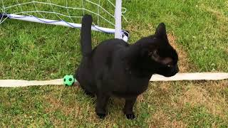 Cat World Cup 2018 Casper and Mack game 3