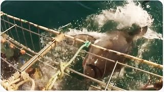 Shark Cage Nearly Breaks | Crazy Shark Video