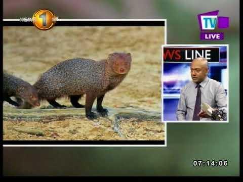 newsline tv1 how can|eng