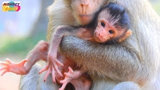 Welcome! New baby Just born in MILA Group|Mom monkey don't know how to care baby|Monkey Daily 480
