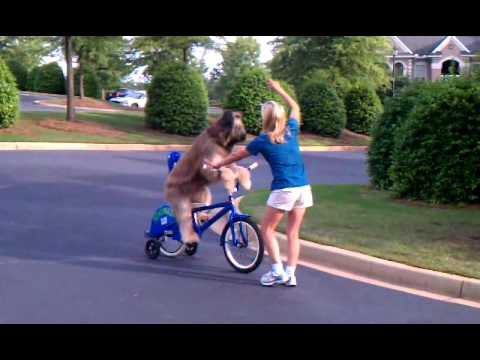 Perros - Perro conduciendo una bicicleta