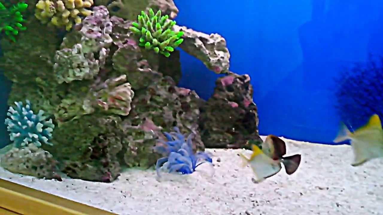 Коралл для аквариума своими руками 445