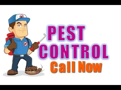 Pest Control Services in Spring TX - (281) 353-4427