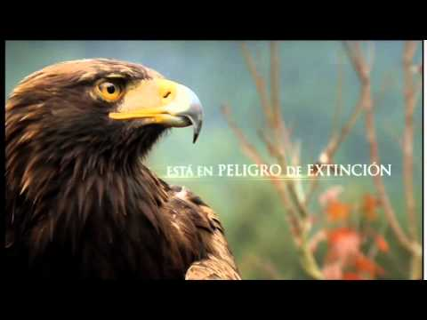Águila Real México