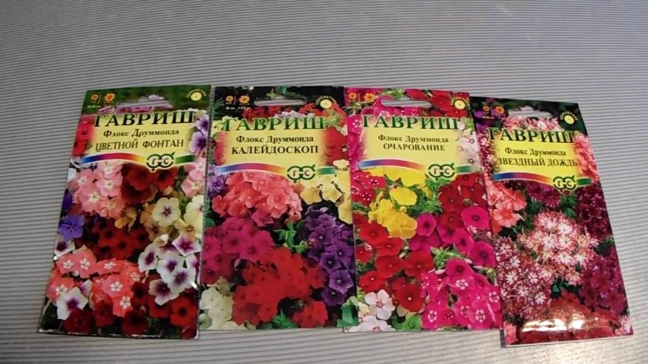 Когда сажать на рассаду многолетние цветы 270