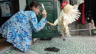 Chuyện lạ con gà dữ nhà  tại cần Thơ.