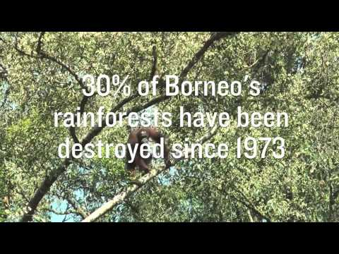 RAN Fast Facts: Borneo
