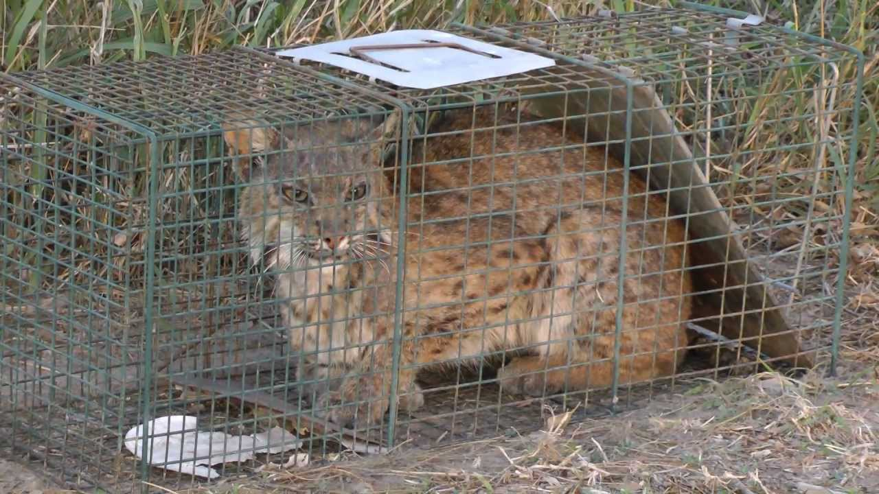 Live Animal Traps For Cats