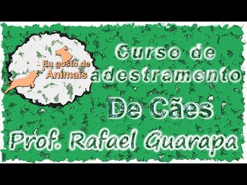 Adestramento de cães - Curso gratuito - Vídeo Aula 05 -  Com: Prof. Rafael Guarapa