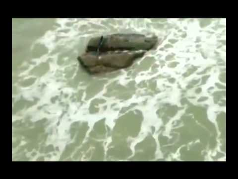 Настоящая русалка попала в объектив камеры