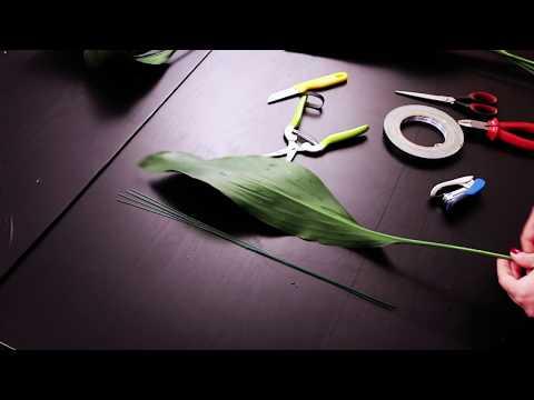 Трансформация аспидистры. 4 способа. Aspidistra transformation
