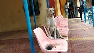 'Dog Funny' || Video ||  Stunning-Brothers Sai Chakri || Smart Puppies Compilation 2018 || Song 11