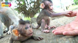 How cute newborn Farrah happy play with my arm | Farrah afraid of jump to mom | Monkey Daily 3361