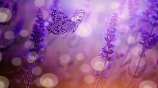 Beautiful Relaxing Calming Music, Cleanse Negative Energy (Add Positive Energy) Sleep Music★ 64