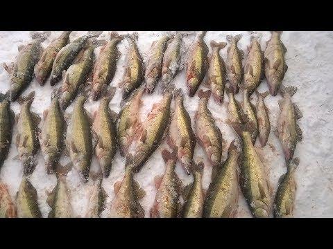 Мега улов!Зимняя рыбалка,сети на судака.