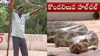 Python Found In Tirumala | తిరుమలలో కొండచిలువ హల్చల్..!