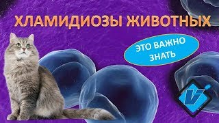 хламидиоз животных методы диагностики :: newVideoBlog