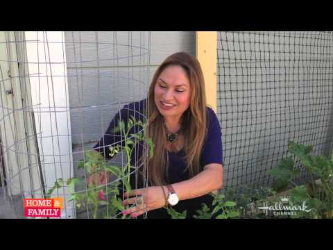 Tomato growing tips from @EdenMaker!