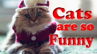 Funny Cat Compilation Video-Cats are so funny you will die laughing Live Stream 24/7