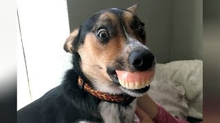 DOGS & PUPPIES - NOTHING will make you LAUGH HARDER